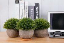 Kunstpflanzen - Geschenk für einen älteren Mann