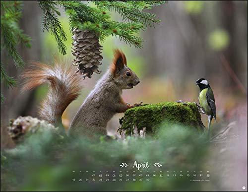 Kalender für Opa - Waldtiere