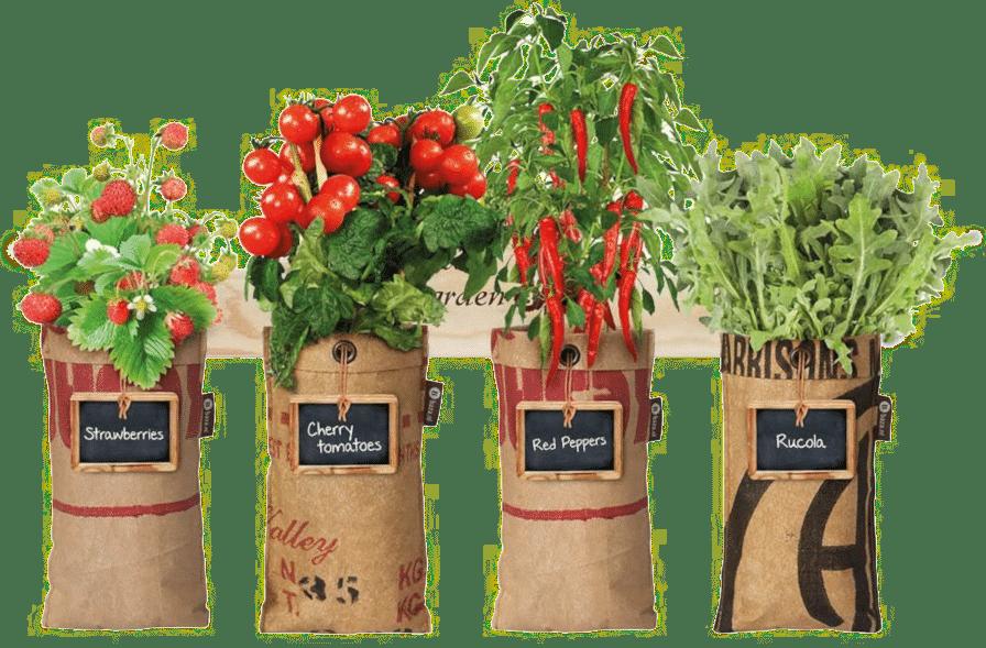 Mini Gemüsegarten - Gemüse selbst anbauen